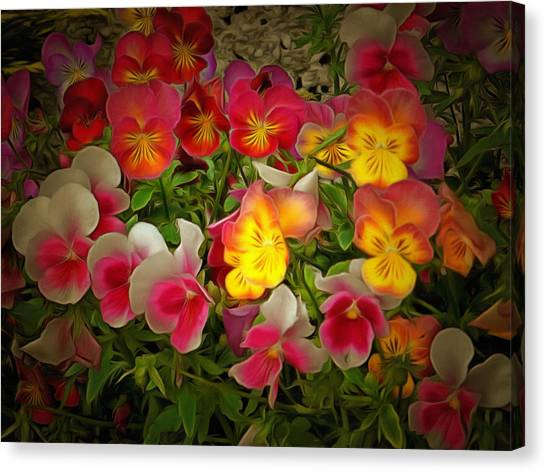 Radiance Pansies Canvas Print