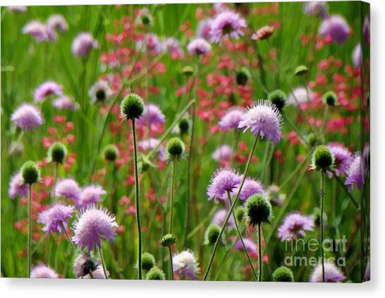 Perky Chives Canvas Print