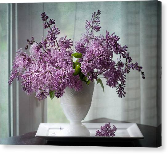 Persians Canvas Print - Persian Lilacs By The Window by Maggie Terlecki