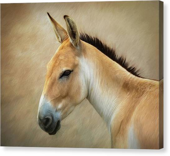 Persians Canvas Print - Persian Onager by Tom Mc Nemar