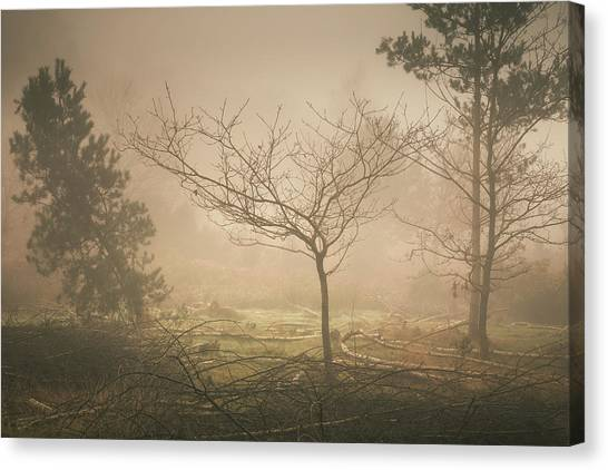 Sherwood Forest Canvas Print - Personal Space by Chris Dale