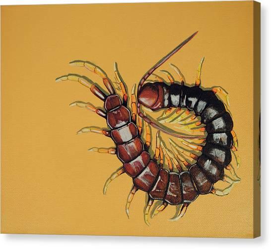 Centipedes Canvas Print - Peruvian Centipede by Jude Labuszewski