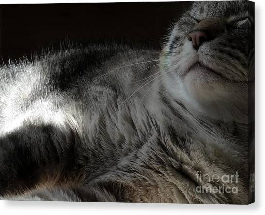 Pet Portrait - Lily Three Canvas Print