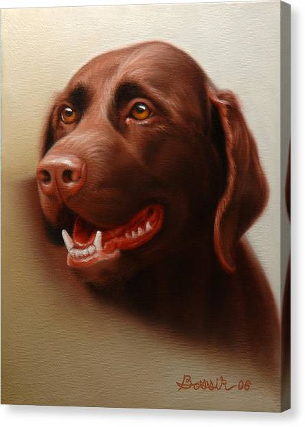 Pet Portrait Of A Chocolate Labrador Canvas Print by Eric Bossik