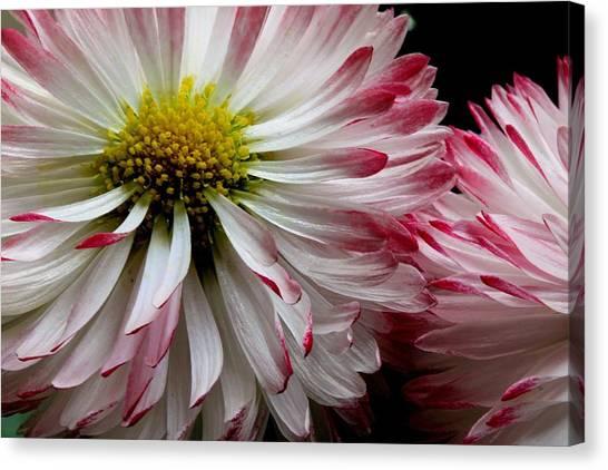 Canvas Print - Petal Friends by Russell Wilson