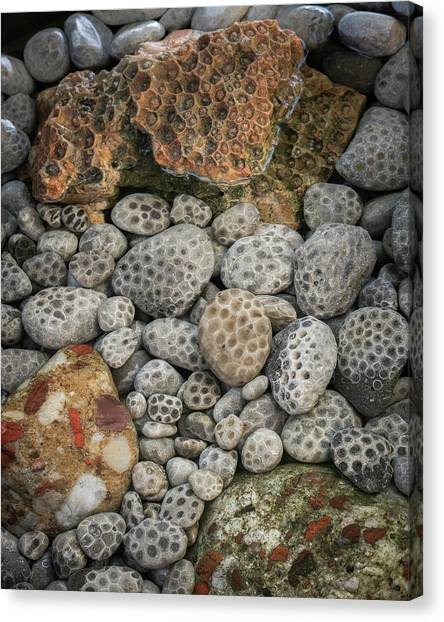 Petoskey And Pudding Stones Canvas Print