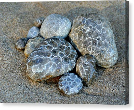 Petoskey Stones Canvas Print