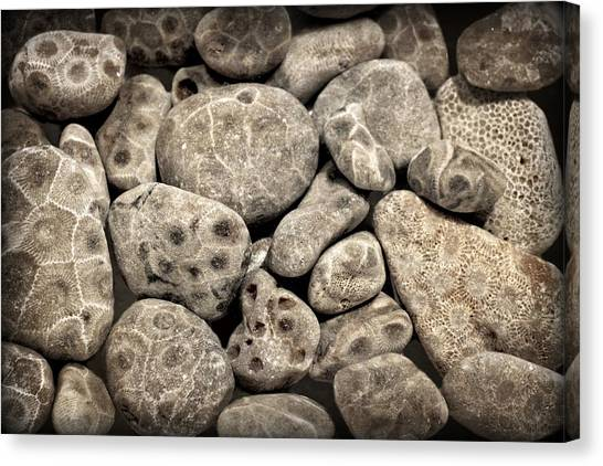Petoskey Stones Vl Canvas Print
