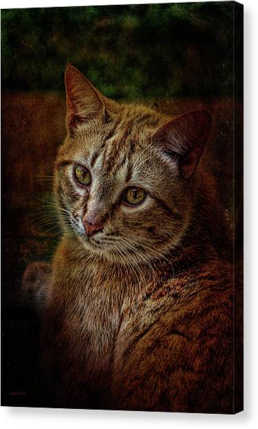 Pets Fat Cat Portrait 2 Canvas Print