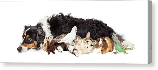 Pets Together On White Banner Canvas Print by Susan Schmitz