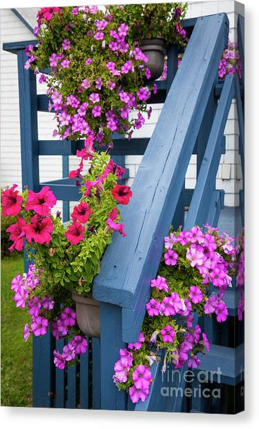 Canvas Print featuring the photograph Petunias On Blue Porch by Elena Elisseeva
