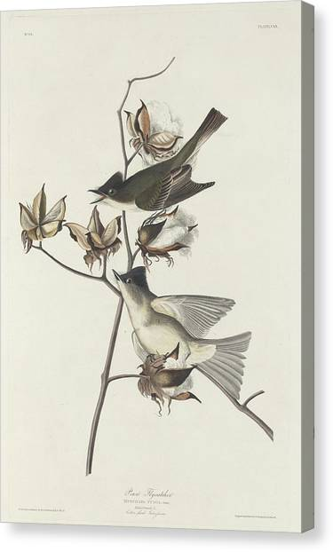 Flycatchers Canvas Print - Pewit Flycatcher by Dreyer Wildlife Print Collections