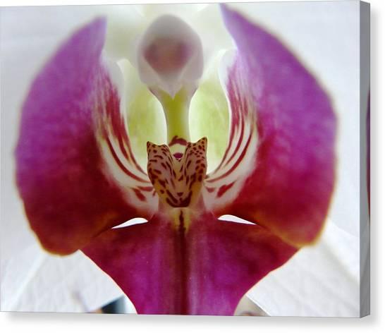 Phalaenopsis Orchid Detail Canvas Print