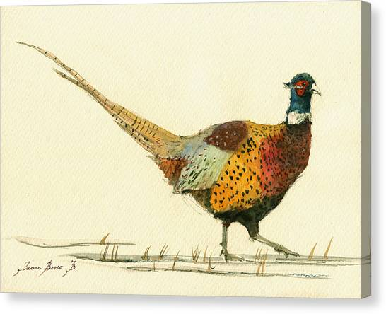 Neck Canvas Print - Pheasant Bird Art by Juan  Bosco