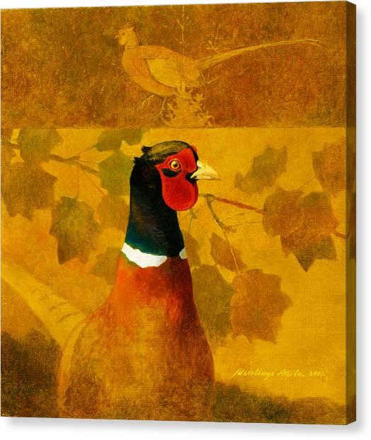 Pheasant In Yellow Canvas Print