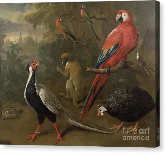 Parrots Canvas Print - Pheasant Macaw Monkey Parrots And Tortoise  by Charles Collins