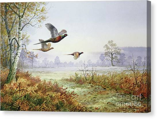 Pheasants Canvas Print - Pheasants In Flight  by Carl Donner