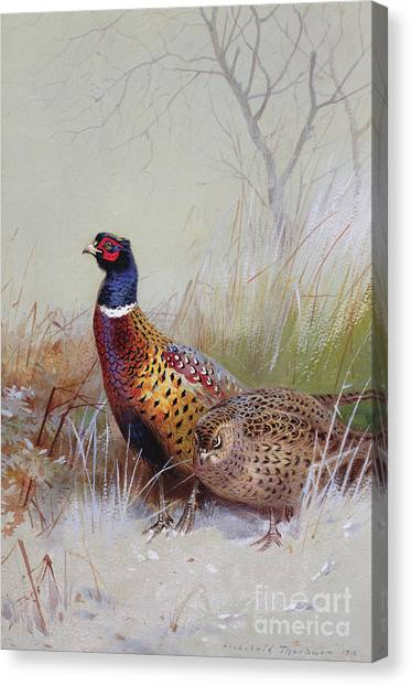 Pheasants Canvas Print - Pheasants In The Snow by Archibald Thorburn