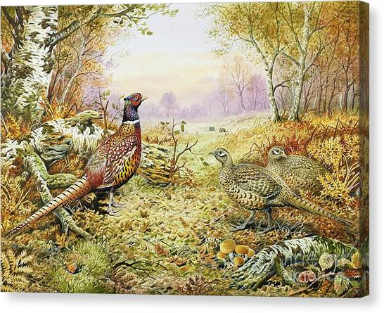 Camouflage Canvas Print - Pheasants In Woodland by Carl Donner