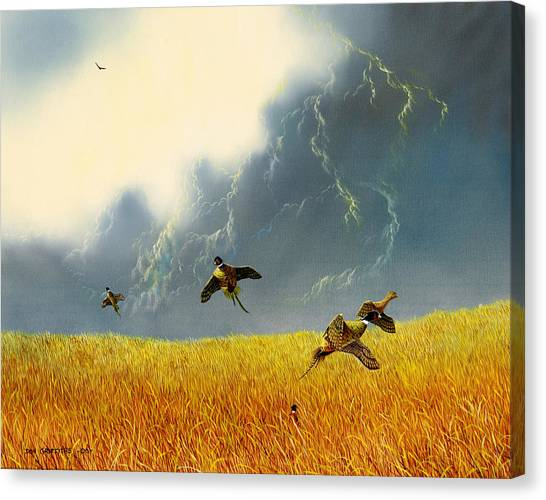 Pheasants On The Rise Canvas Print by Don Griffiths