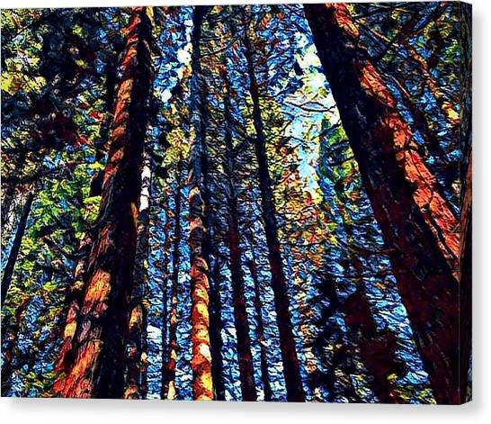 Phil's Trees Canvas Print
