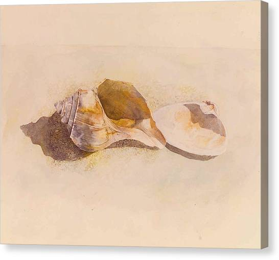 Phinney's Point Shells Canvas Print