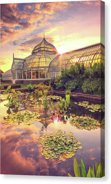 Lilys At Phipps  Canvas Print