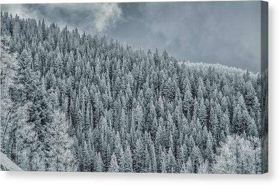 Canvas Print featuring the photograph Winter Pines by Lou Novick