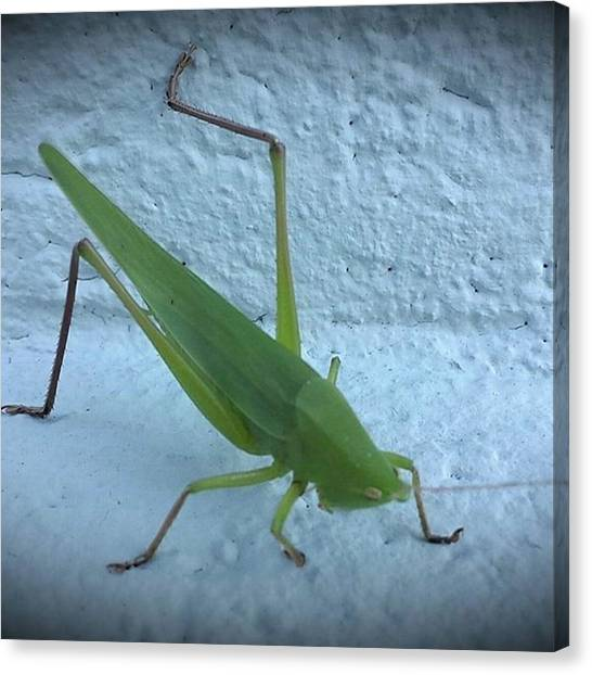 Grasshoppers Canvas Print - #photography #photograhyislife #art by Shauna Wilborn