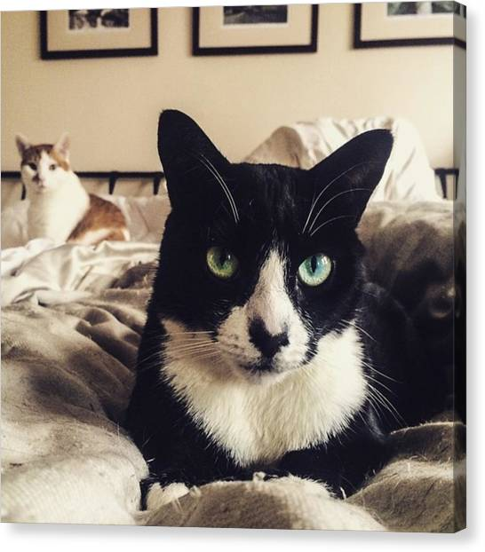 Tuxedo Canvas Print - #photoshopexpress #buster #catlover by Clinton Brandhagen