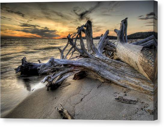 Pic Driftwood Canvas Print