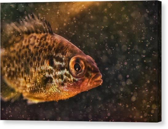 Susan Canvas Print - Pices In Aquarium by Susan Capuano