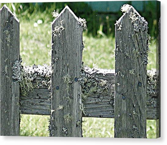 Picket Fence Canvas Print by Mg Blackstock