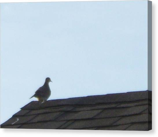 Picture Of A Pigeon Canvas Print