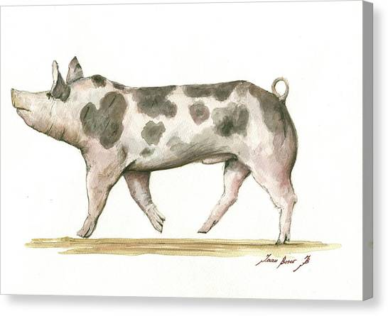 Hogs Canvas Print - Pietrain Pig by Juan Bosco