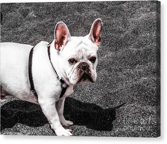 French Bull Dogs Canvas Print - Pig Bunny by Heather Joyce Morrill