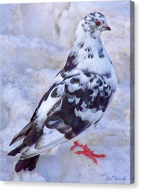 Pigeon On Ice  1 Canvas Print