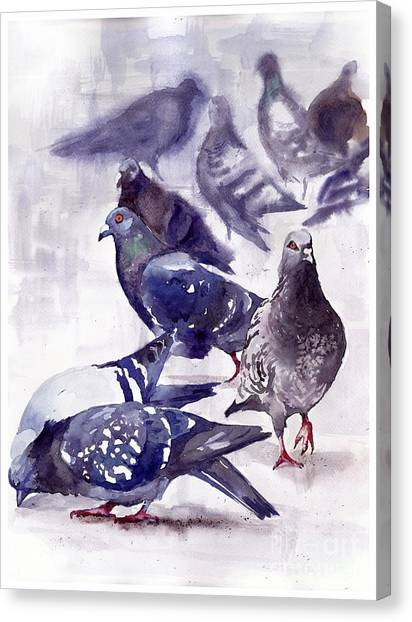 Robin Canvas Print - Pigeons Watercolor by Suzann's Art