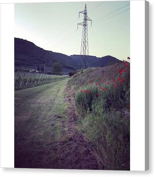 Yen Canvas Print - #pigozzo #sagradellasparasina by Yen Ong