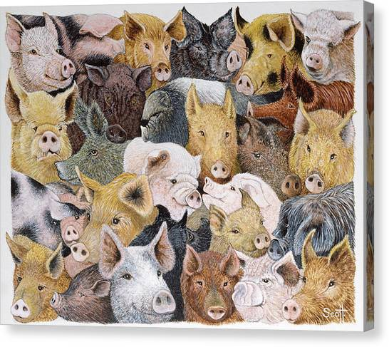 Signature Canvas Print - Pigs Galore by Pat Scott