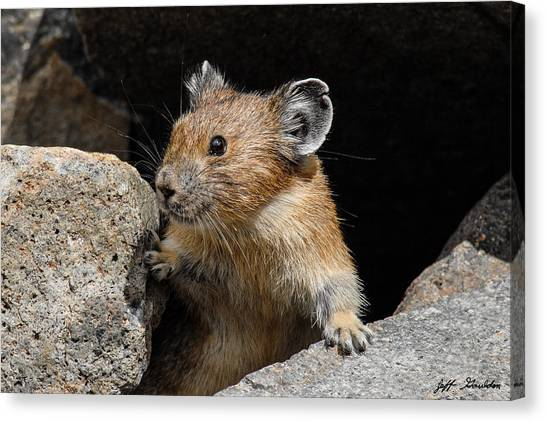Pika Looking Out From Its Burrow Canvas Print