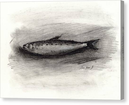 Charcoal Canvas Print - Pilchard Drawing by Juan Bosco