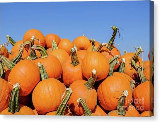 Pile Of Pumpkins Canvas Print