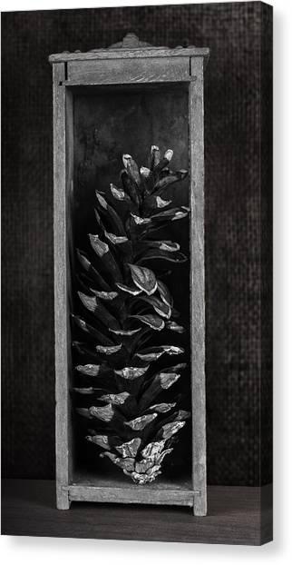 Nature Still Life Canvas Print - Pine Cone In A Box Still Life by Tom Mc Nemar