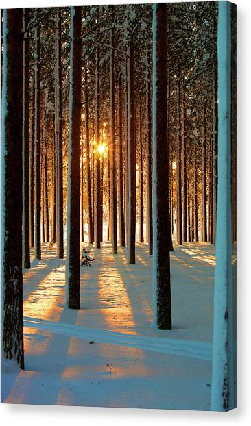 Trees In Snow Canvas Print - Pine Forest by www.WM ArtPhoto.se