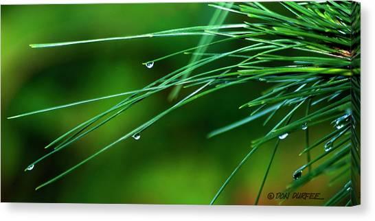 Canvas Print - Pine Needle Raindrops by Don Durfee