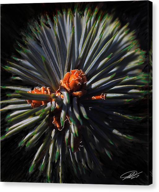 Pine Rose Canvas Print