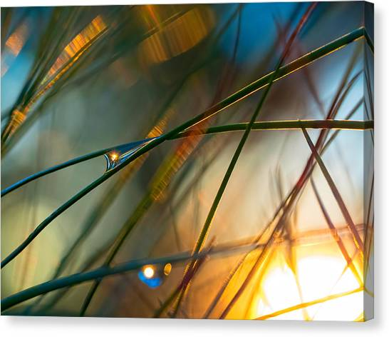 Pine Needle Sunset Canvas Print