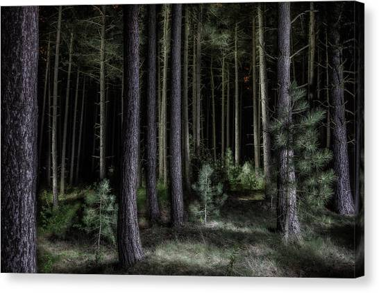 Newts Canvas Print - Pine Tree Forest At Night by Dirk Ercken