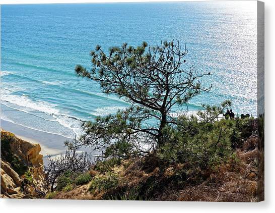 Pine Tree On Coast Canvas Print